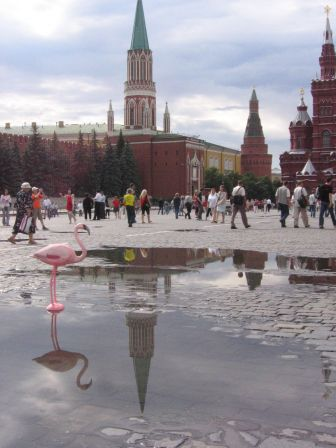 Flamingo in Red Square - After Rain